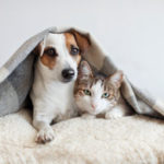Pets under blanket